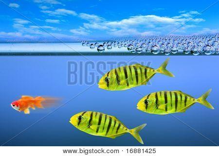 Predatory fish and little gold-fish