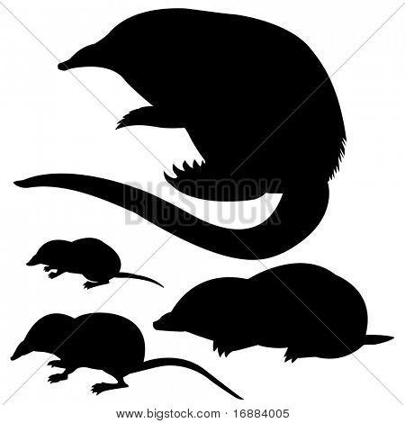 silhouettes to desmans,  eurasian water shrew, common shrew, mole