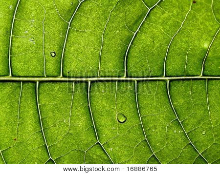 texture of the leaf