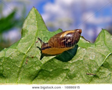 snail on sheet tree