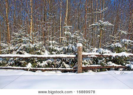 old fence near wood