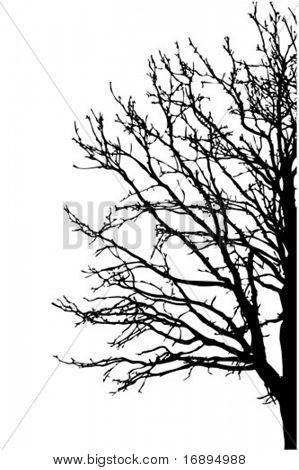 árbol de silueta vector sobre fondo blanco