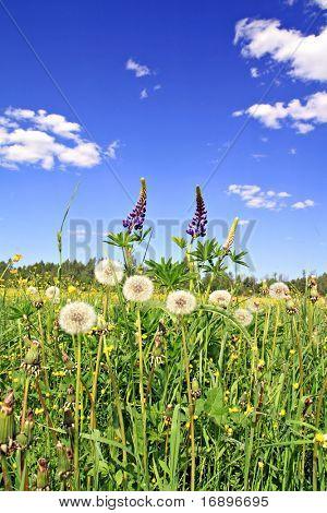 flowerses on field