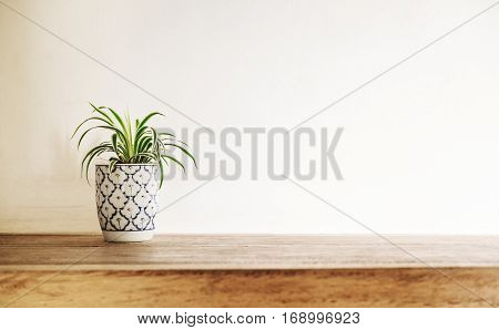 poster of Wooden desk table top with tree pot on white wall, with copy space