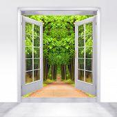 picture of open door  - Opened door to early morning in green oak alley  - JPG