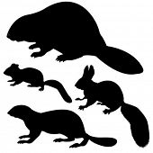 pic of animal silhouette  - vector silhouette animal on white background - JPG