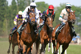 picture of running horse  - horses and jockeys running fast on the race - JPG
