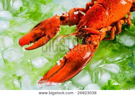 lobster on the ice with the leafs of lettuce