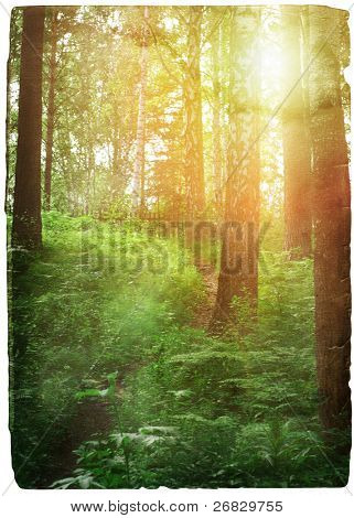 old grungy illustration, sunset in the forest