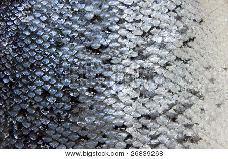 Salmon scales, close-up - natural texture