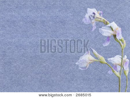Paper With Irises