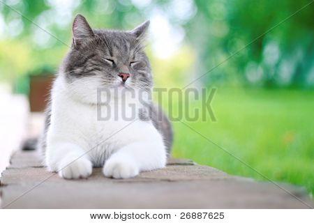 Cute cat enjoying his life outdoors.