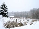 image of bull rushes  - a wintery scene - JPG