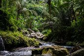 River In Stones Of Tropical Jungle Nature At The Banner Image. Jungle Nature Of Bali Island. Nature  poster
