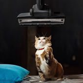 Pretty Ginger Cat Is Surprised And Frightened By A Working Vacuum Cleaner During Cleaning Apartment. poster