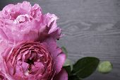 Pion-shaped Roses, A Bouquet Of Pion-shaped Roses On Grey Background, Pink Pion-shaped Roses. Gift F poster