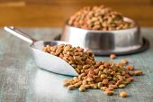 Dry pet food. Dry kibble food in scoop. poster