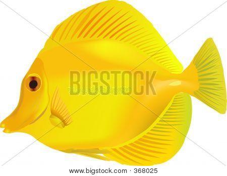 Tang Yellow
