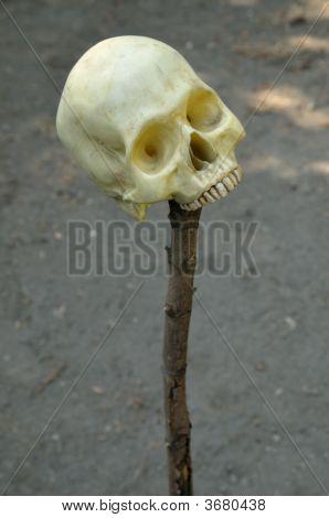 Human Skull On Stick