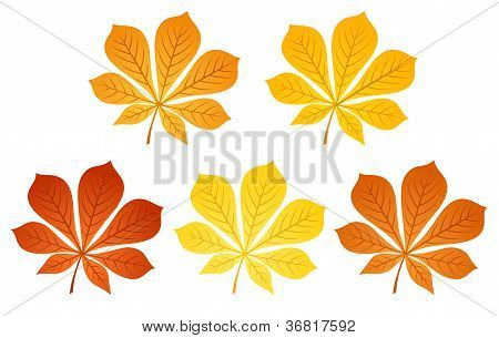 Five autumn chestnut leaves. Vector illustration.