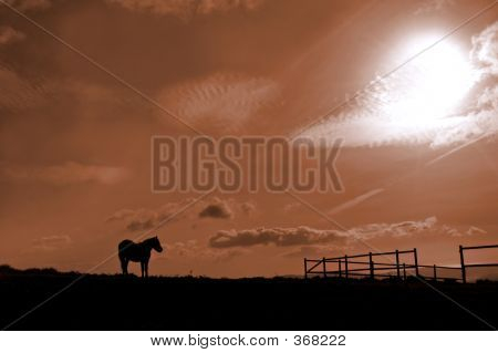 Horse And Stable