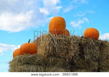 Abóboras laranja e azul céu