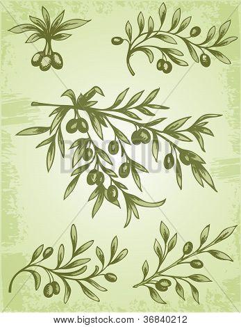Vintage Olive Branch