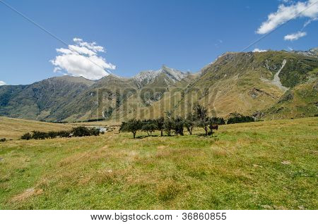 Peaceful Meadow With Trees And Mountains