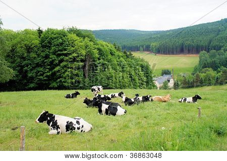 A herd of cows