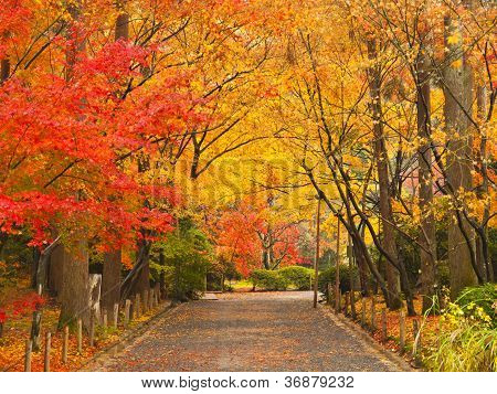 Pathway In Autumn