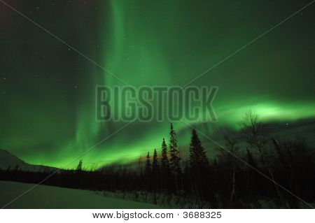 Aurora Polaris Above The Forest