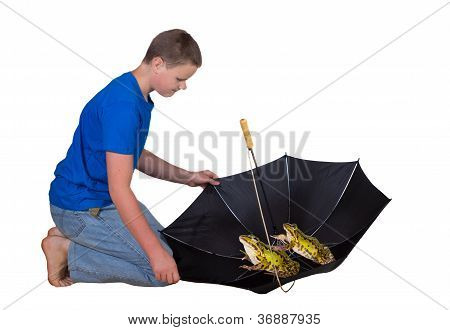 Two Frogs In An Umbrella