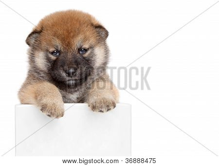 Dog Puppy Show Paws Above White Banner