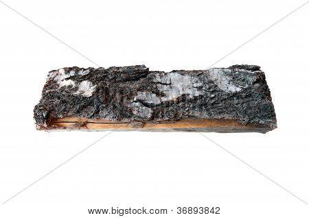 Birch Log
