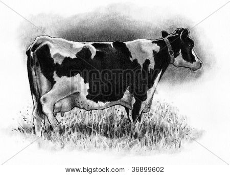 Pencil Drawing of Old Holstein Cow