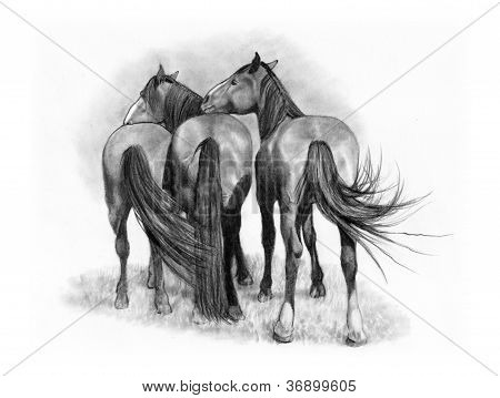Three Affectionate Horses: Pencil Drawing