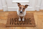 foto of white terrier  - dog welcome home on brown mat and door - JPG