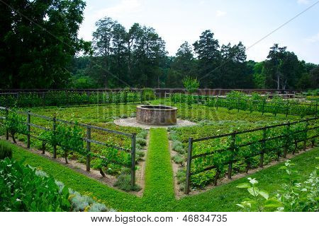 Vegetable Garden At Mount Vernon