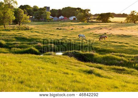 two horses grazing in Kansas pasture, evening