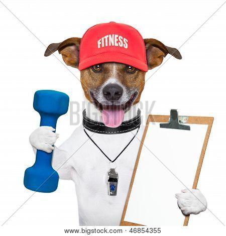 Fitness Dog