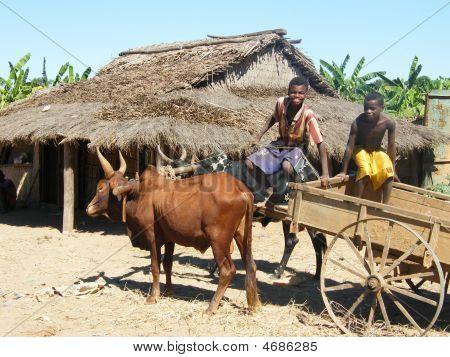 Rural Life In Madagascar
