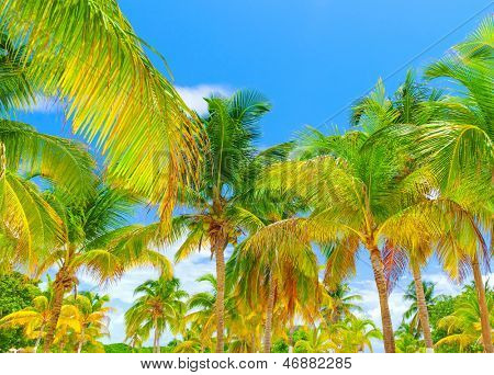 Beautiful fresh green palm tree on blue sky background, luxury tropical resort, panoramic landscape, paradise beach, summer travel and tourism concept