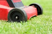 image of grass-cutter  - Detail of lawnmower on green grass in sunny day - JPG