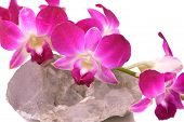 stock photo of crystallography  - twig of pink orchid on druse of quartz - JPG