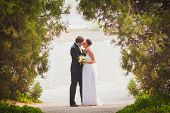 image of juniper-tree  - bride and groom outdoors park under trees arc - JPG
