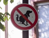 stock photo of dog poop  - Warning road sign against allowing dog to poop in the street - JPG