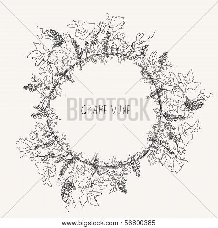Grape vine sketch frame round label