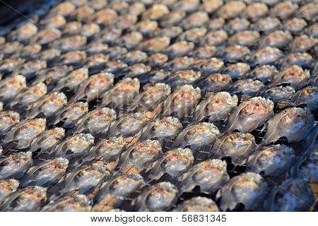 Row Of Salt Fish Dry Under The Sun