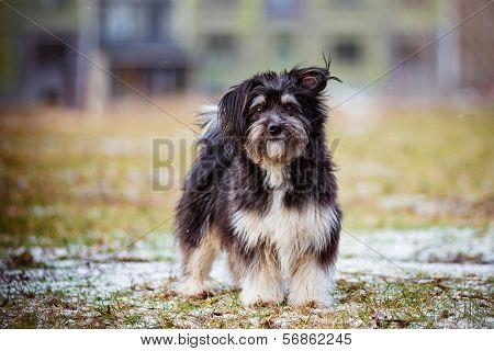 funny black mixed breed dog