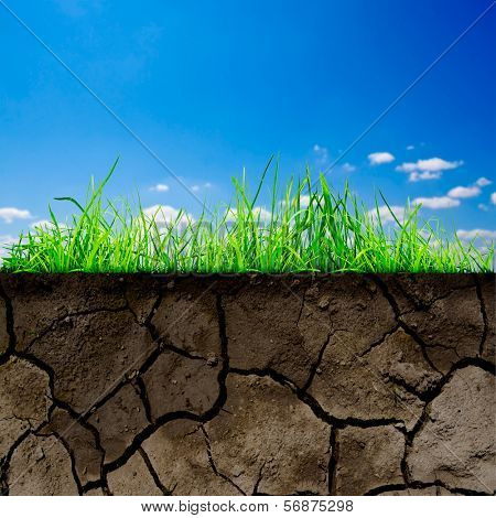 green grass with in soil isolated on the sky background